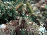underwater-photographs-nick-shallcross_15