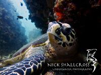 underwater-photographs-nick-shallcross_6