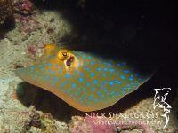 underwater-photographs-nick-shallcross_10