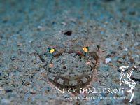 underwater-photographs-nick-shallcross_14