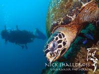 underwater-photographs-nick-shallcross_16