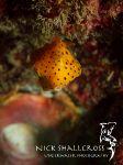 underwater-photographs-nick-shallcross_17