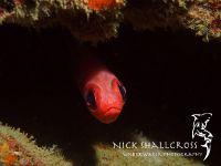 underwater-photographs-nick-shallcross_19