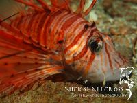 underwater-photographs-nick-shallcross_21
