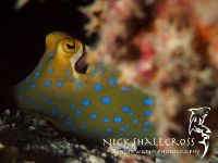 underwater-photographs-nick-shallcross_23