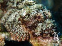 underwater-photographs-nick-shallcross_33