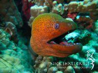 underwater-photographs-nick-shallcross_35
