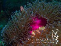 underwater-photographs-nick-shallcross_3