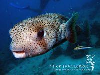 underwater-photographs-nick-shallcross_5