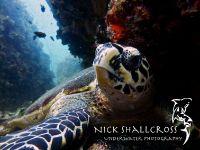 underwater-photographs-nick-shallcross_6