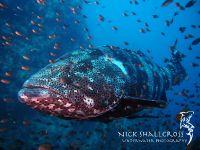 underwater-photographs-nick-shallcross_7