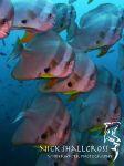 underwater-photographs-nick-shallcross_8